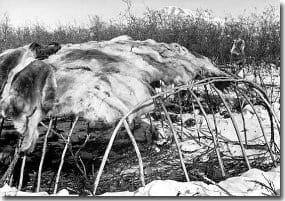 Tent Made Of Animal Skin